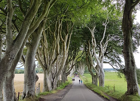 Dark Hedges - Game of Thrones Private Tour
