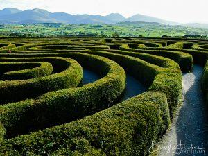 Pease Maze